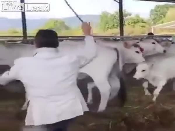 Doslova obrana svých blízkých i u zvířat