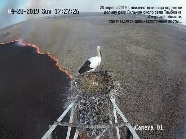 Požár u čapího hnízda