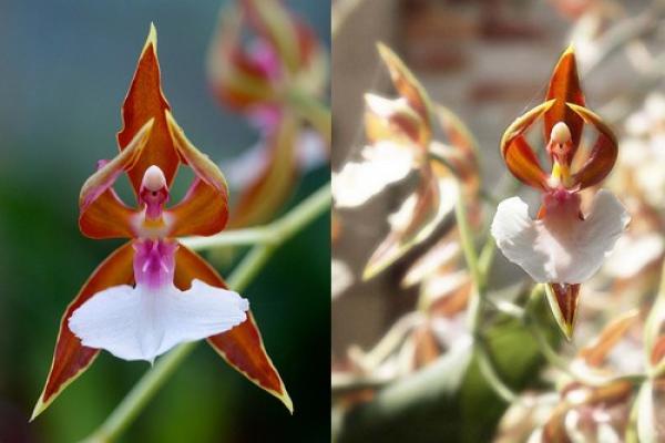 GALERIE - Květiny připomínající zvířata nebo rostliny
