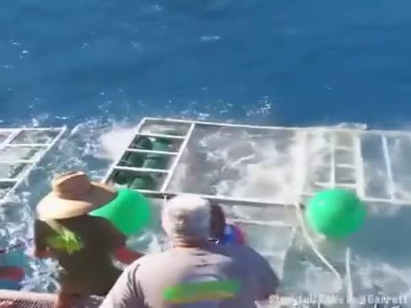 Letní hrátky se žraloky
