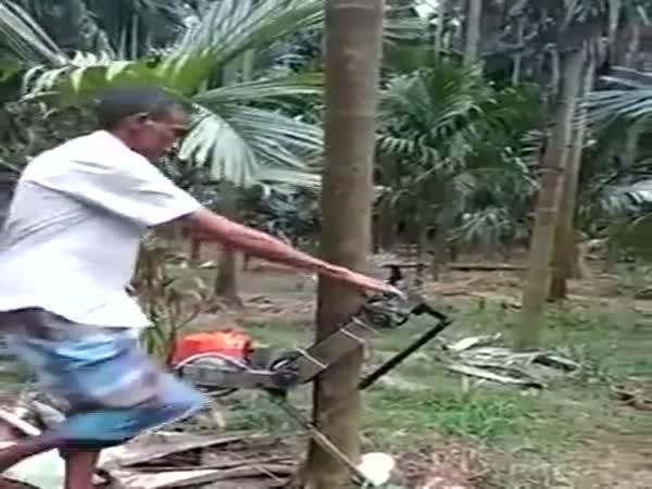 Jak snadno a rychle vylézt na strom?