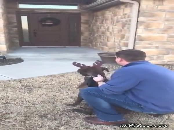 Obrovská radost ze psa