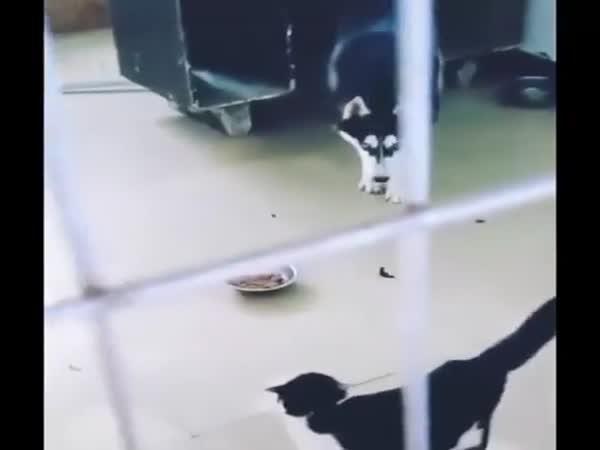 S kočkami je vždycky zábava!