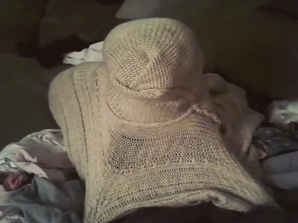 Pes vtipně zamotaný ve svetru