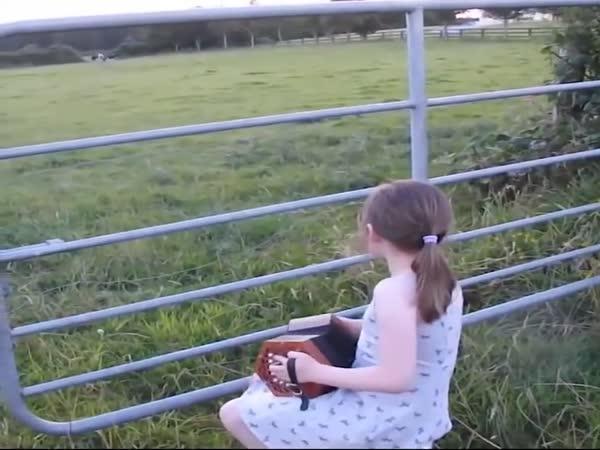 Krávy milují hudbu