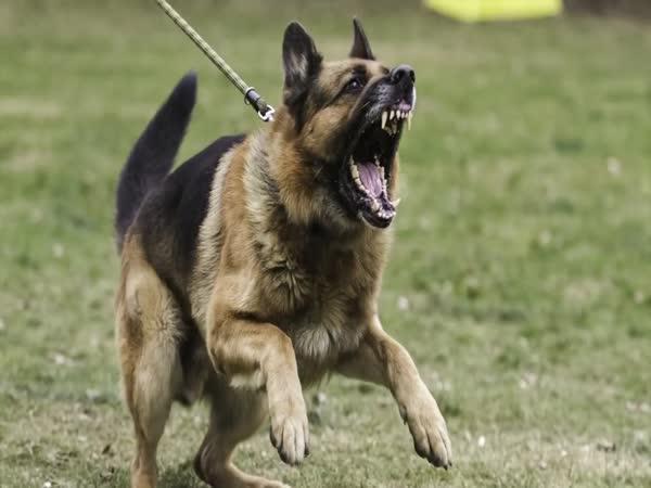 Co dělat, když vás napadne pes