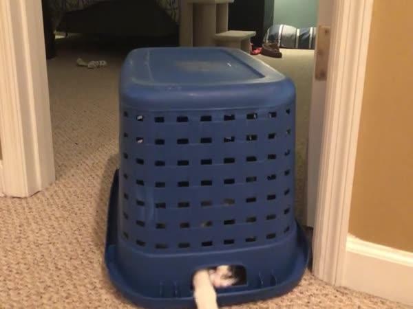 Kočičí zloděj ponožek