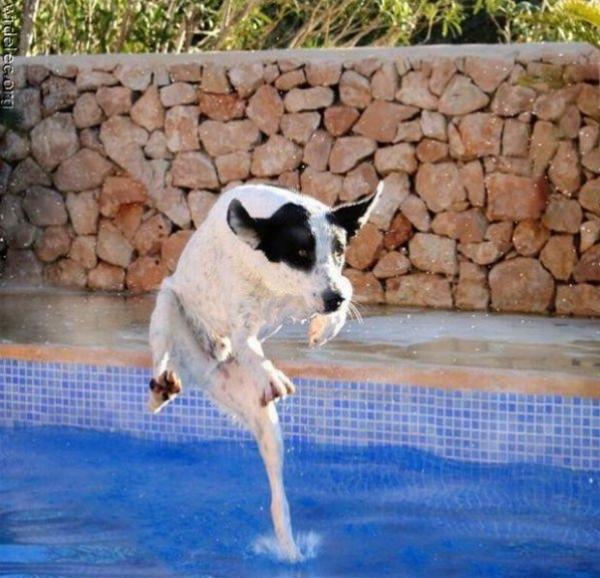 GALERIE – Nejlepší momentky od bazénu