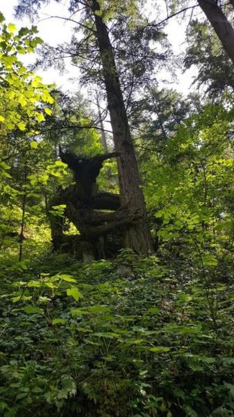 GALERIE – Nikdy nevíš, co se skrývá v lese