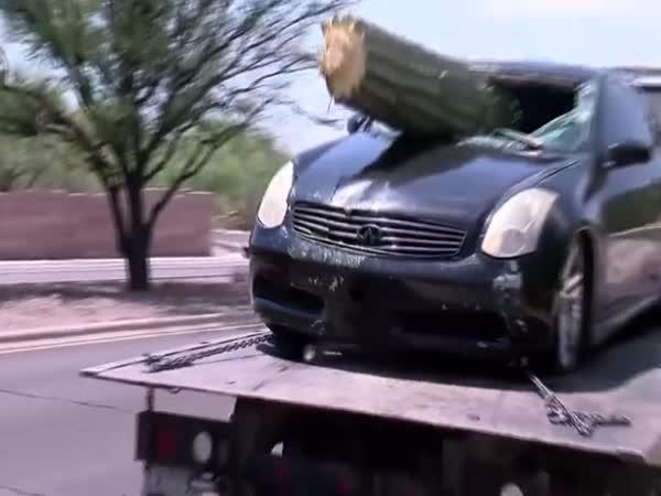 Řidičovi kaktus prorazil čelní sklo