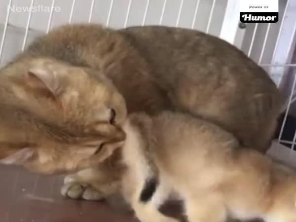 Kompilace - Zvířata reagují na zápach