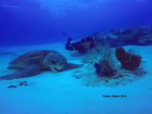 Opravdu gigantická želva