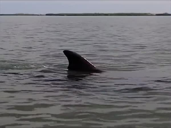 Delfíni a jejich technika lovu