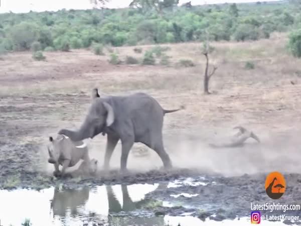 Slon vyhnal nosorožce ze svého teritoria