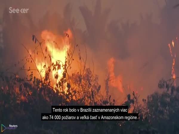 Amazonský prales a produkce kyslíku