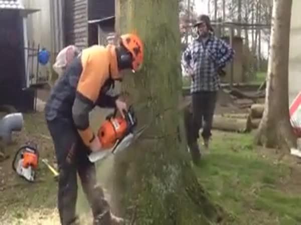 Jak správně pokácet strom