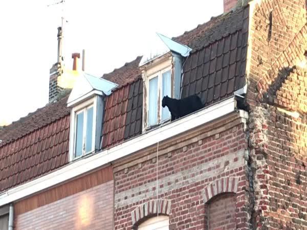 Po střeše běhal černý panter (Francie)