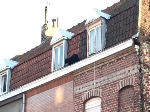 Černý panter na střeše domu