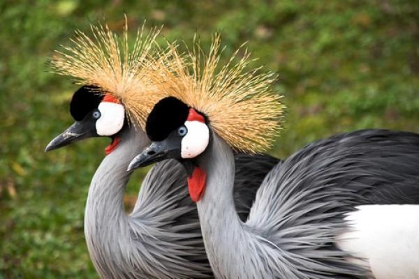 GALERIE - Nejhezčí ptačí korunky