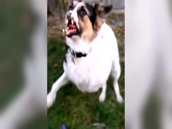 Zachránil život zraněnému psovi