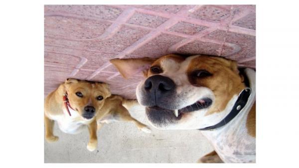 GALERIE – Tihle psi jsou prostě strop!