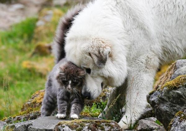 GALERIE – Soužití psa a kočky