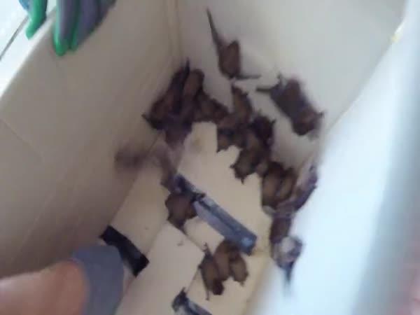 52 netopýrů v klimatizaci