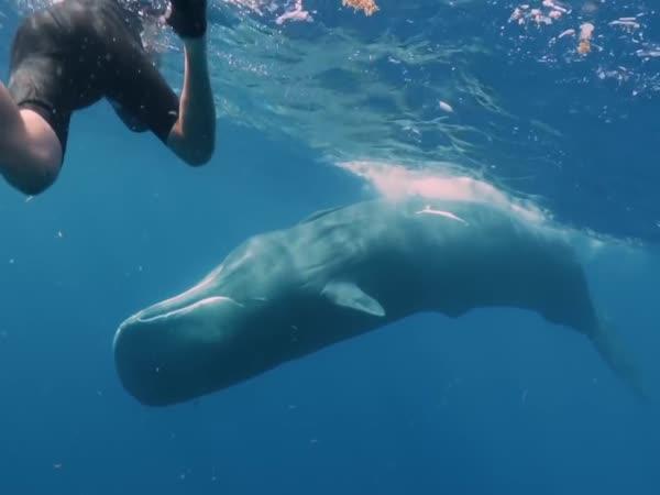 Co kdyby vás spolkla velryba