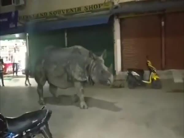 Nosorožeč v rušných ulicích Nepálu