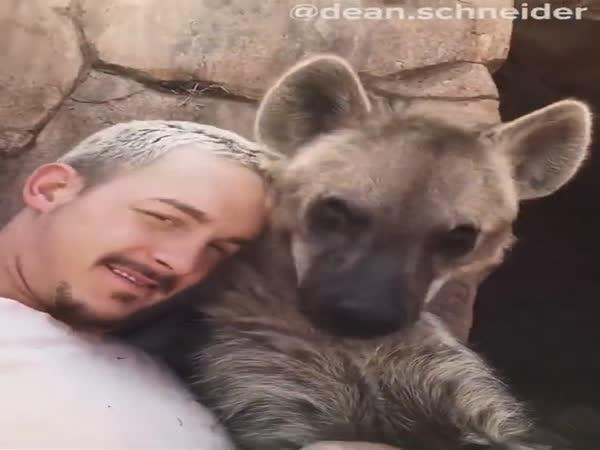 Hyena skvrnitá je nádherné zvíře