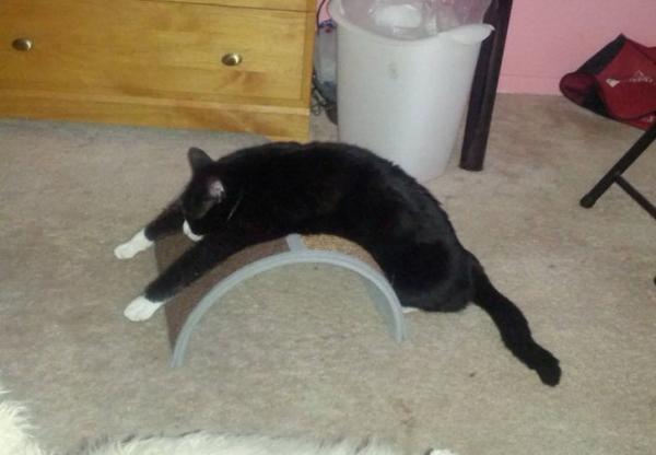 GALERIE – Kočky s vlastním rozumem