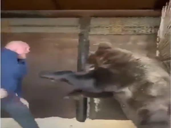Ruský MMA zápasník vs medvěd
