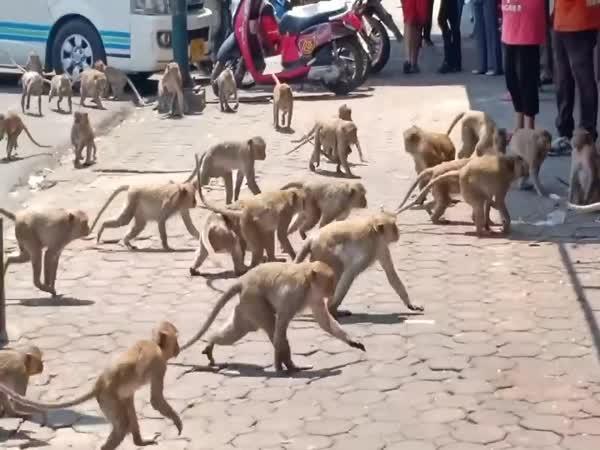 Planeta opic v reálném životě