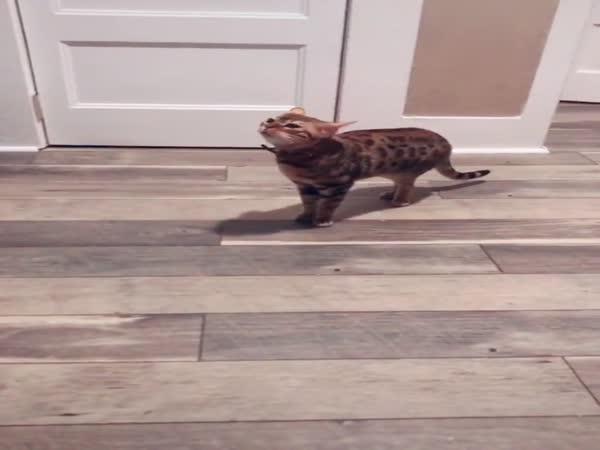 Postižená kočka!