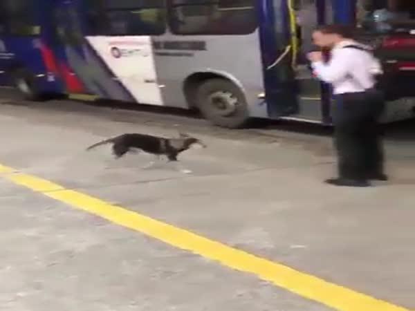 Pes a jeho oblíbený řidič