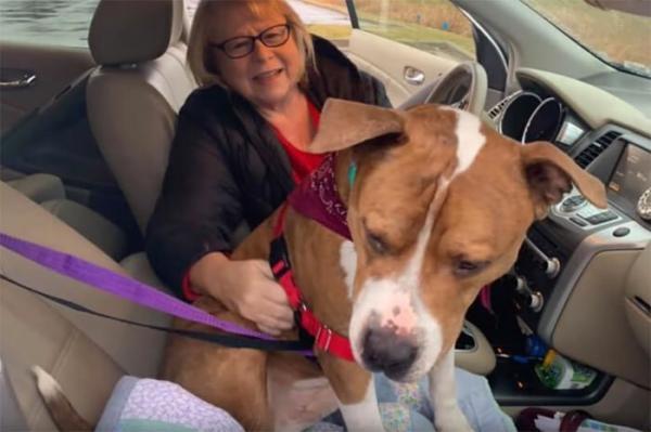 GALERIE - Ztracený pes a jeho cesta domů