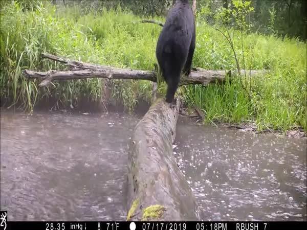 Rok nechal kameru v přírodě
