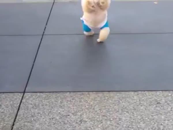 Pes akrobat!
