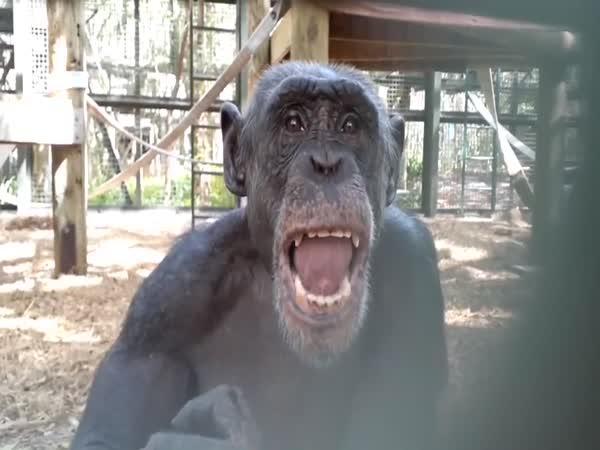 Šimpanzi vs. zrcadlo