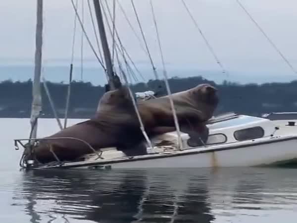 Komu patří tato plachetnice?