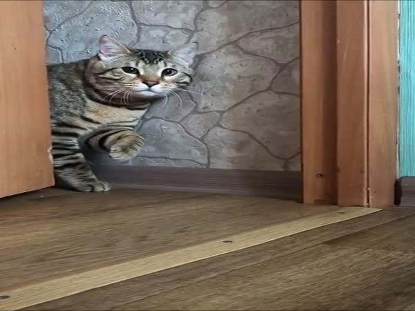 Dobrý den, můžu jít dál?