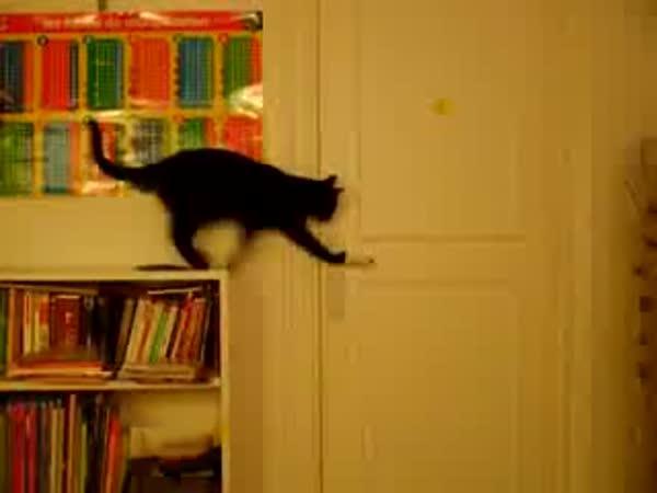 Kočka vs. dveře