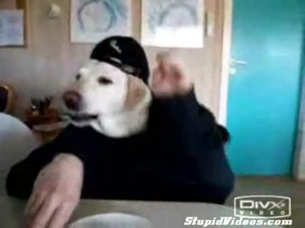 Opravdu šikovný pes