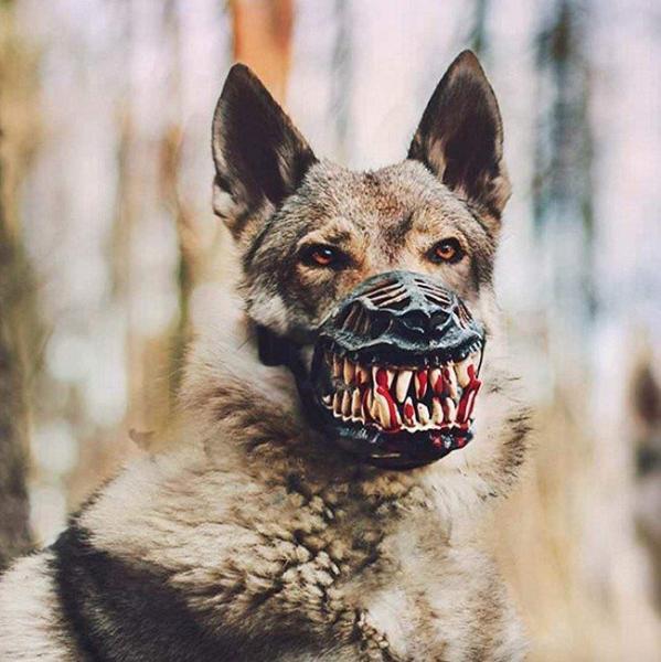 GALERIE – Krvelačné psí náhubky