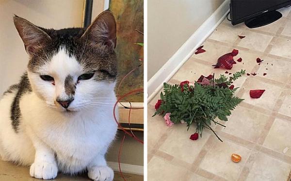 GALERIE – Kočky, které si určují pozici šéfa