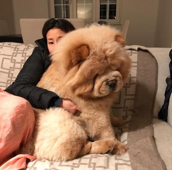 GALERIE – Takto už nevypadá pes, ale medvěd