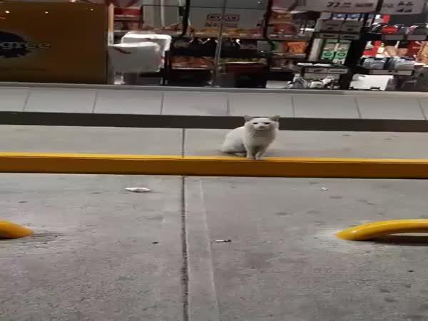Kočka si vybere jídlo