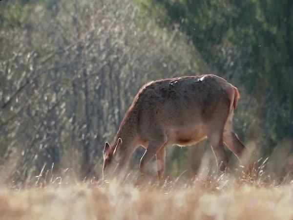 Zvířata ve volné přírodě na jaře
