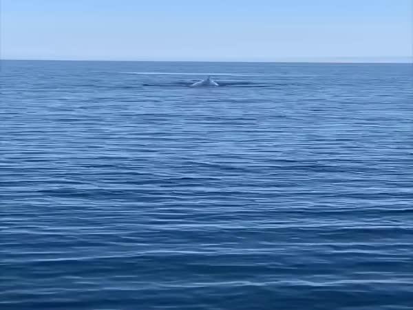 Velryby na pobřeží Chorvatska