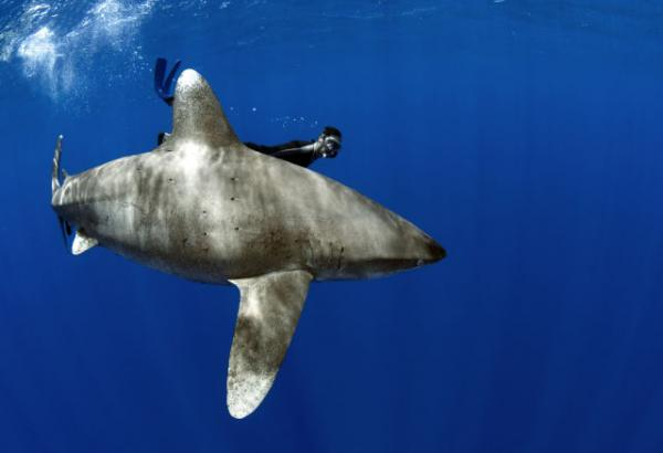 GALERIE - Podvodní fotografie žraloků